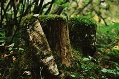 4_stumps